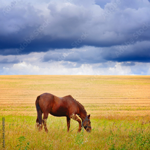 Horse in a field, farm animals. Autumn pasture before the storm.