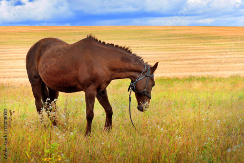 Horse in a field, farm animals, autumn pasture.