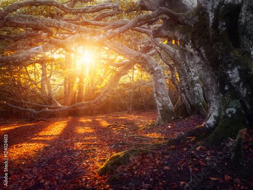 Billede Forêt en automne