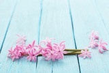 fresh flowers hyacinths on wooden background