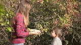 Mother and son collecting wild red berries for herbarium. Son with mother picking red ripe sweet berries