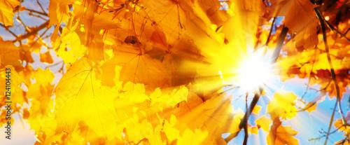Herbstblätter in der Sonne - Autumn leaves in the sun - 124104443