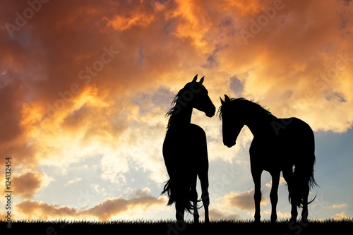 horses silhouette in love at sunset