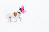 Funny dog on white snow background playing with a toy