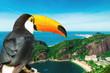 Quadro Toucan bird on the nature in Rio de Janeiro, Brazil