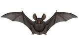 Flying bat - 3D render - 124177848