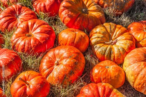 Plakat Cinderella pumpkins