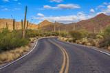 Saguaro National Park - 124195653