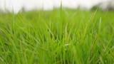 lawn green grass field beautiful nature