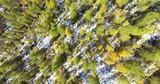 Aerial 4k - Larici - ripresa aerea verticale