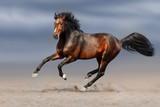 Bay stallion run gallop in sand  - 124258431