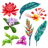 Fototapety Set of Thailand flowers. Tropical multicolor plants, leaves and buds