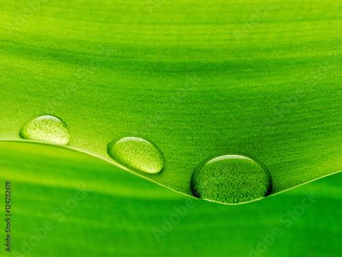 Leinwandbild Motiv Plantleaf