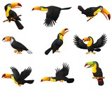 Set of toucans cartoon