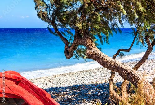 Griechische Farben - Divi Divi Baum und ein rotes Boot auf einem Strand auf Rhod Poster