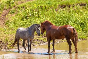 horses duo