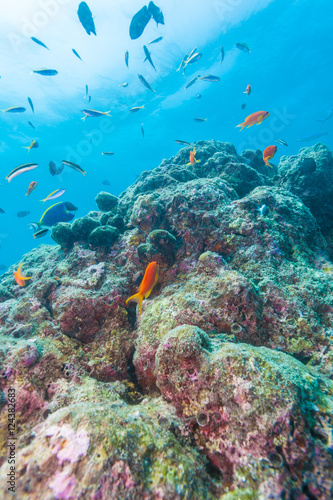Poster Colorful ocean landscape with lstone corals in the Maldives