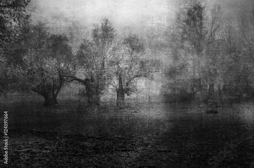 Art grunge landscape showing creepy old forest on cloudy autumn - 124397664