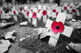 Remembrance day display in Westminster Abbey - 124410057
