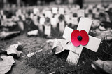 Remembrance day display in Westminster Abbey - 124410058