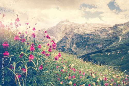 Rocky Fisht Mountains and green alpine valley with blooming pink flowers Landscape Summer Travel scenic view