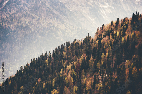 Coniferous Forest Landscape aerial view autumn season Travel concept - 124435478
