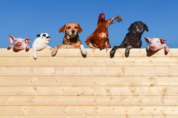 Ziemlich beste Freunde - Gruppe Haustiere auf einer Bretterwand, textfreiraum © Countrypixel