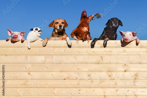 Foto Murales Ziemlich beste Freunde - Gruppe Haustiere auf einer Bretterwand, textfreiraum