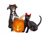 Halloween Puppy and Kitten With Jack-O-Lantern