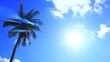 Silhouette Sunshine and coconut tree in sky blue have cloud