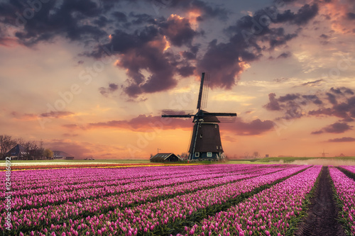 Holland Landscape with Tulip and Windmills Poster