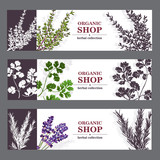 Fototapety Organic Shop Banners With Herbs