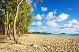 Fototapety Ironwood trees lining up Waimanalo beach in Oahu Island, Hawaii