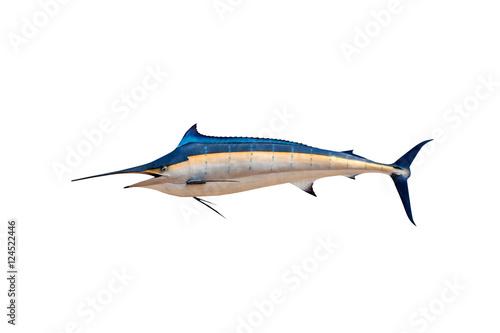 Marlin - Swordfish,Sailfish saltwater fish (Istiophorus) isolate Poster