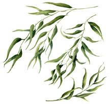 Aquarelle feuilles d'eucalyptus ensemble de la branche. Peint à la main des éléments floraux. Illustration isolé sur fond blanc. Pour la conception, le textile et le fond.