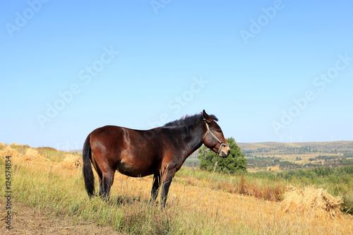 The grasslands of a horse in the autumn