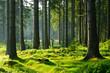 Unberührter naturnaher Fichtenwald im warmen Licht der Morgensonne - 124579847