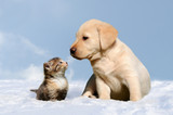 dog and cat in the snow - 124583488
