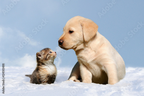 Poster dog and cat in the snow