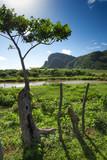 hummocks in valley of Vinales,Cuba