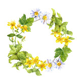 Floral, herbal wreath. Grass, flowers. Watercolour circle frame