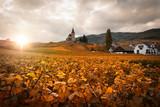 Vignoble d'alsace et vignes en automne