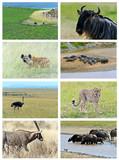 Collage fauna of Kenya