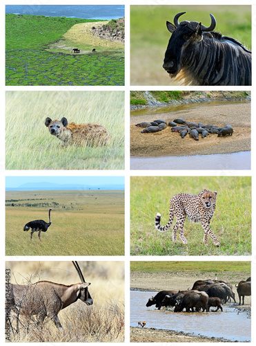 Collage fauna of Kenya