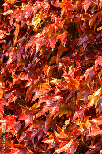 In de dag Oranje eclat red leaves