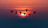 Geese flying against red sky background - 124689801