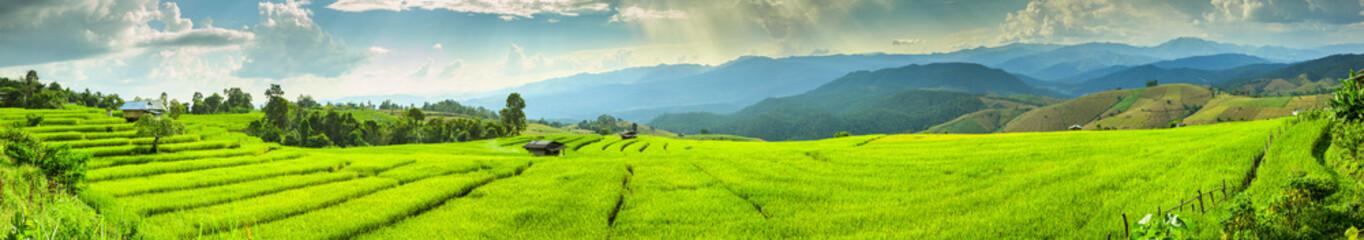 Fototapeta zielone pole panorama