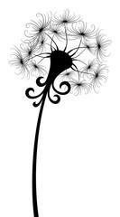 Flower field dandelion.
