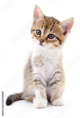 Poster Kitten on white background.