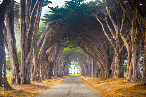 Point Reyes Cyress Tree Tunnel - 124773440